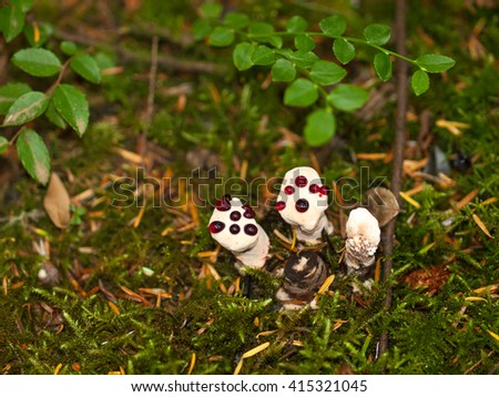 Closeup of Woodland Mushrooms on the Forest Floor - stock photo