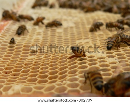 Closeup of working bees - stock photo