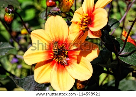 closeup of  yellow flower and bee