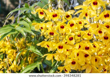 Closeup of yellow orchid phalaenopsis. Beautiful orchid flower blooming. Bouquet of orchid flower. Orchid background for design. Orchid flower of Thailand. - stock photo