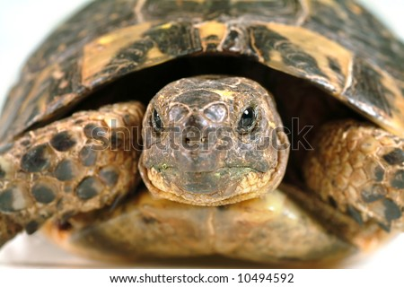 closeup on a turtles face - stock photo
