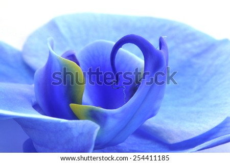 Closeup on blue orchid - stock photo