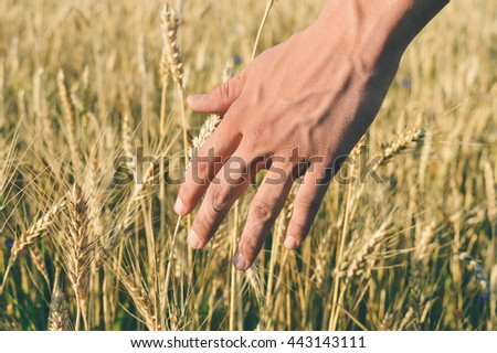 Closeup on hand with wheat ears. Harvest concept background outside - stock photo