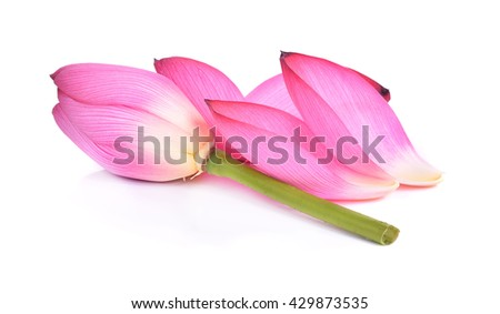 Closeup on lotus  on white background