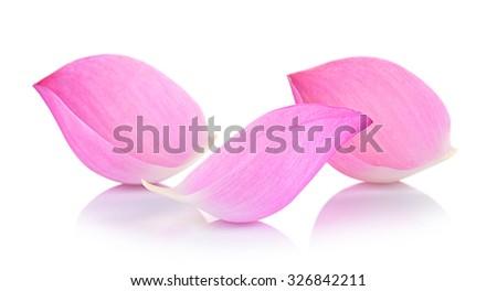 Closeup on lotus petal on white background - stock photo