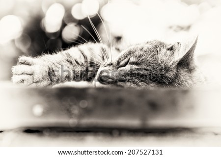 Closeup on the head and fore paw of an adult tabby cat sleeping lengthened on a low wall. Black and white fine art portrait of domestic cat. - stock photo