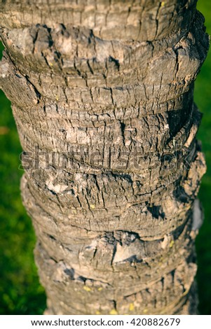 Closeup on tree surface texture background