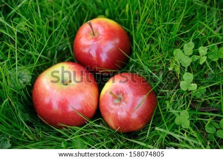 Closeup organic apples in grass - stock photo