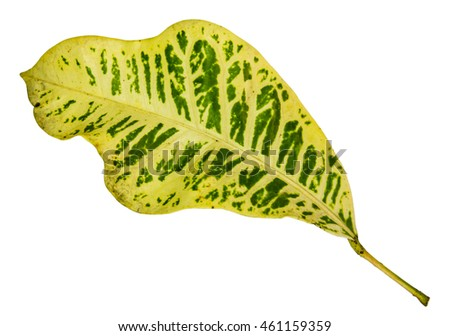 Closeup pattern of colorful leaf with isolated background