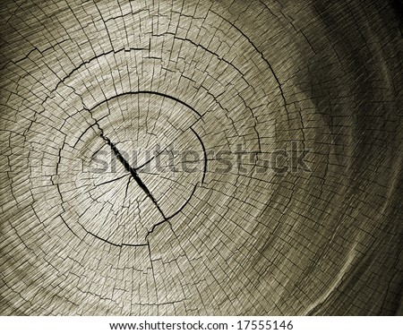 Closeup patterns and textures of a wood slice. - stock photo
