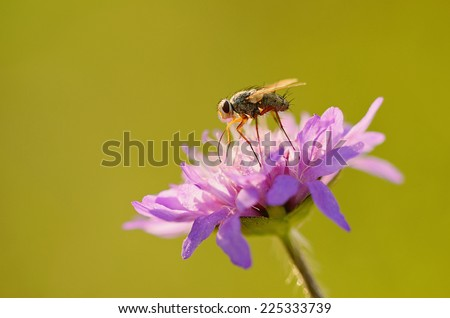 Closeup photo of a fly on purple flower