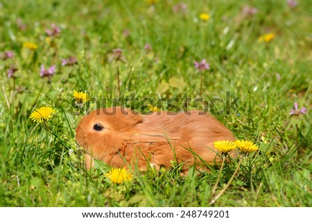Closeup photo of a  little rabbit on green grass