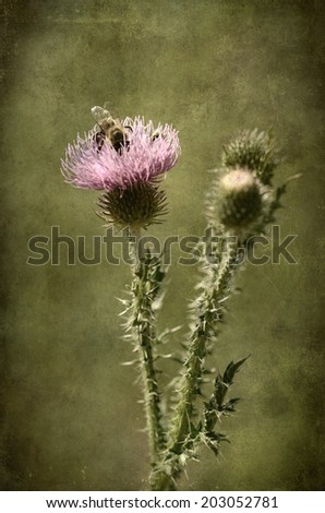 Closeup photo of a thistle wildflower on textured background - stock photo