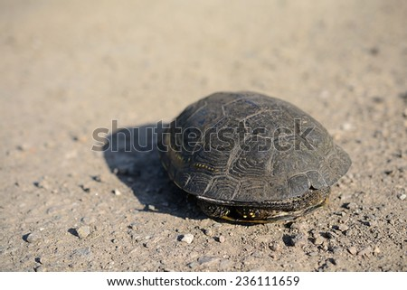 Closeup photo of a tortoise in home - stock photo