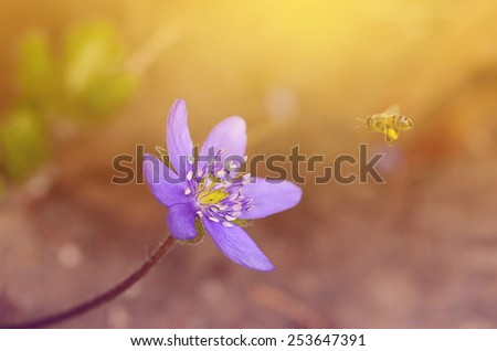 Closeup photo of beautiful purple wildflower in spring - stock photo