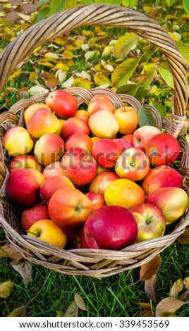 Closeup photo of big wicker basket full of red apples - stock photo