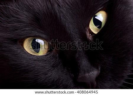 Closeup photo of black cat muzzle
