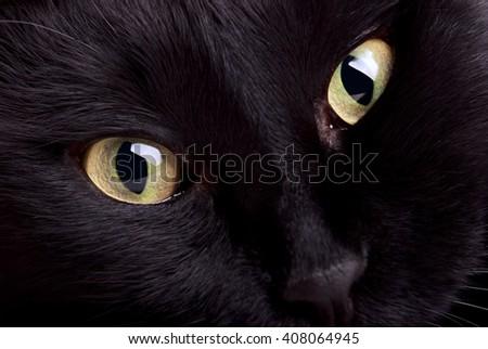 Closeup photo of black cat muzzle - stock photo