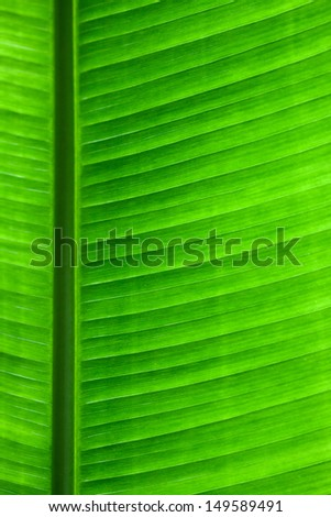 Closeup photo of green leaf backlit with the structure of letters