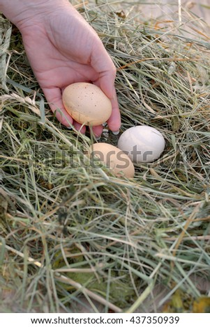 Closeup photo of hand picking white egg from nest