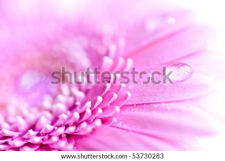 Closeup photo of pink daisy-gerbera - stock photo