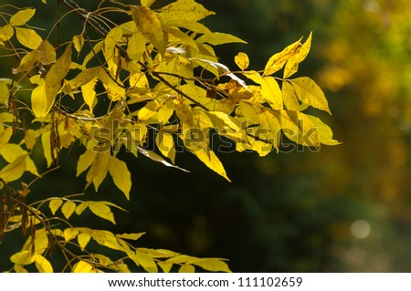 Closeup photo of some autumnal leaves