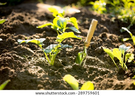Closeup photo of spade in garden with small sprouts - stock photo