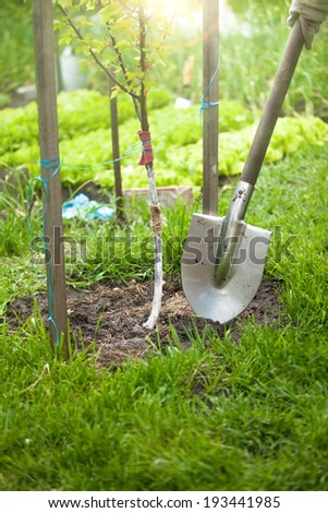 Closeup photo of tree being planted by shovel at sunny day - stock photo
