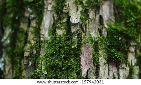 closeup photo of tree trunk with moss, macro - stock photo