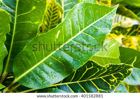 Closeup photo of wet fresh tropical plant leaves - stock photo