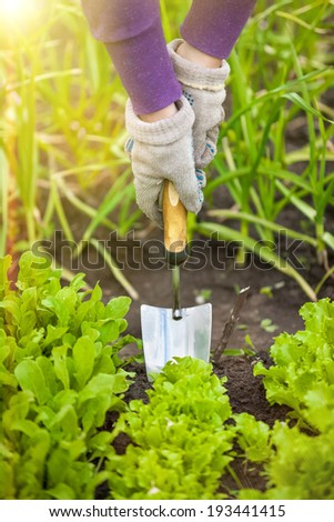 Closeup photo of woman digging with hand shovel at garden at sunny day - stock photo