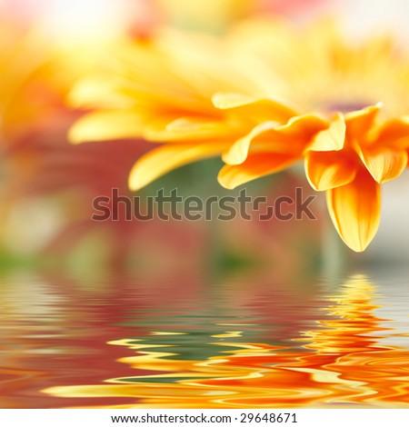Closeup photo of yellow daisy-gerbera - stock photo