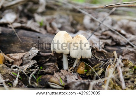 closeup picture fungus in the foliage - stock photo