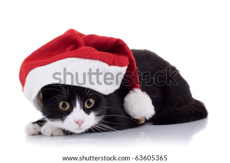 closeup picture of a cute black and white cat wearing a christmas hat - stock photo