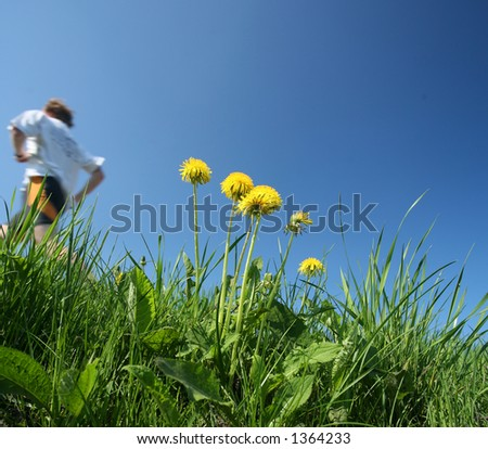 closeup picture of a dandelion  yellow flower among grass and blue sky, man running