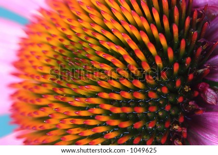 closeup picture of a flower