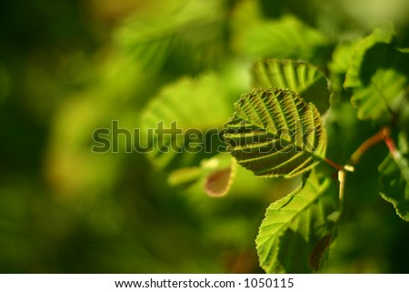 closeup picture of leaves