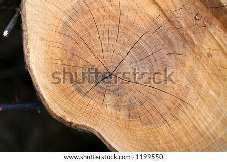 closeup picture of  tree trunk