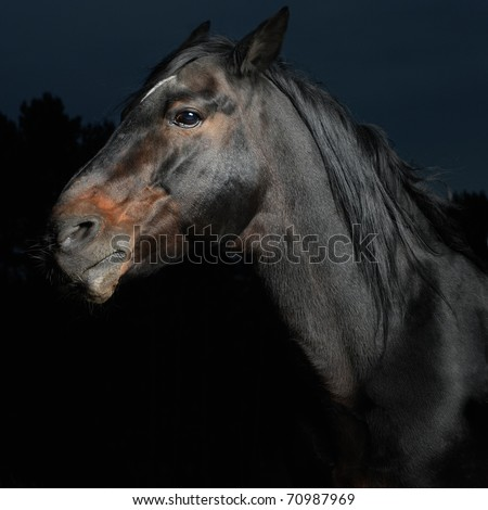 Closeup portrait black horse in the dark - stock photo