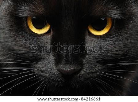 Closeup portrait of a Halloween black cat - stock photo