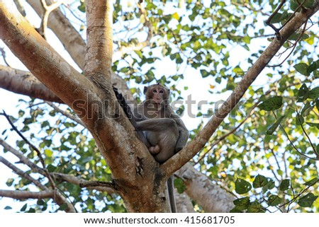 closeup portrait of a monkey on a tree in the park of Thailand
