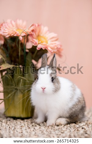 Closeup portrait of a small bunny against pink background next to a flower pot - stock photo