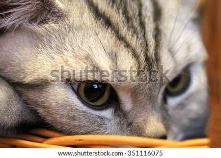 Closeup portrait of cat in the backet. - stock photo