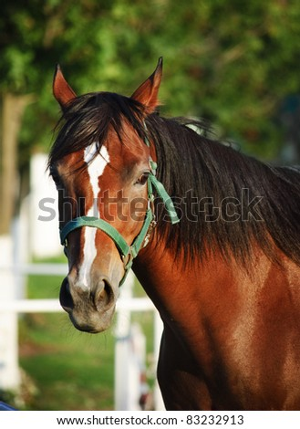 Closeup portrait of chestnut horse with bridle - stock photo