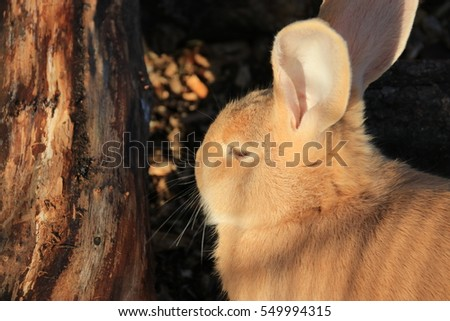 Closeup portrait of  rabbit
