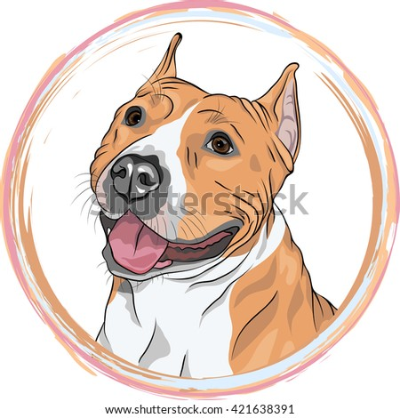 Closeup portrait of the smiling dog. Dog American Staffordshire Terrier breed in the round frame. T-shirt Graphics. Dog print. - stock photo