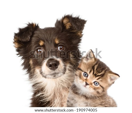 closeup puppy dog and kitten together. isolated on white background - stock photo