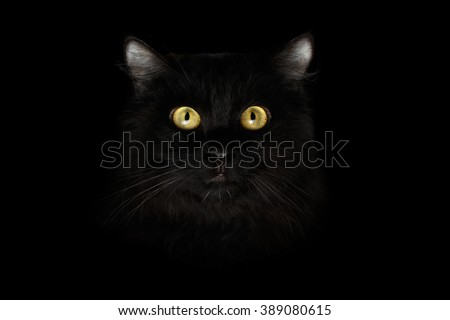 Closeup Scared Black Cat Face with Yellow Eyes in Dark Background - stock photo