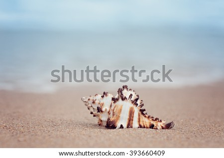 closeup shell on sandy exotic ocean beach. natural summer background - stock photo