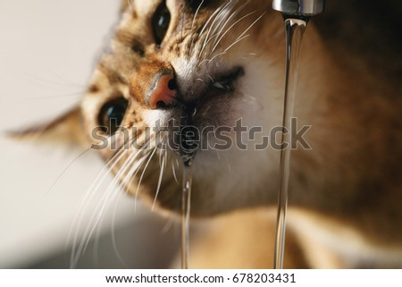 Cat Faucet Stock Images, Royalty-Free Images & Vectors | Shutterstock